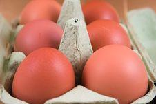 Free Eggs Stock Photo - 4910560