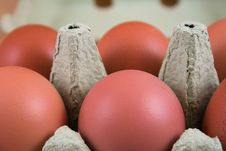 Free Eggs Royalty Free Stock Photo - 4910565