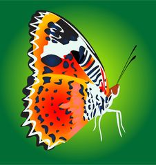 Free Butterfly Royalty Free Stock Photography - 4910947