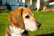 Free Dog Royalty Free Stock Photo - 4911435