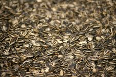 Free Sunflower Seeds Royalty Free Stock Photo - 4913505