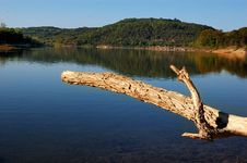 Dried Tree Over Lake Stock Photo
