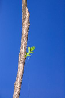 Dry Branch With Green Leaves Royalty Free Stock Photography