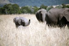Free Baby Elephant Walking Through The Grass Stock Images - 4917104