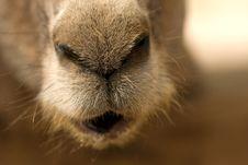 Free Donkey Stock Image - 4917271