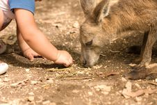 Free Kangaroo And Human Child Relationship Royalty Free Stock Photo - 4917705