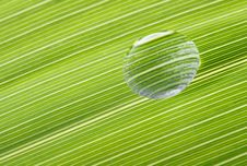 Free Waterdrop On A Leaf Royalty Free Stock Photography - 4917807