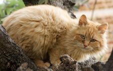 Free Cat On A Tree Royalty Free Stock Image - 4918026