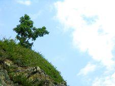 Free Tree On The Rock Royalty Free Stock Photography - 4918177