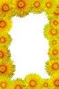 Free Dandelion Frame Stock Images - 4928254