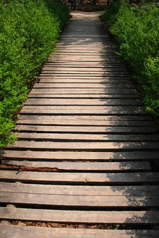 The Wood Path In The Bush Stock Photos
