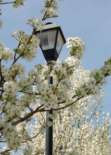 Free Lamppost In The Trees Royalty Free Stock Images - 4921669