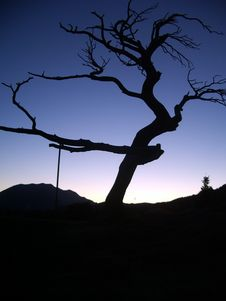 Free Frank Slide Tree 2 Stock Photography - 4921682