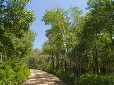 Free Green Forest Road Royalty Free Stock Photos - 4922698
