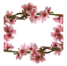 Free Frame From Pink Peach Flowers Stock Image - 4923151