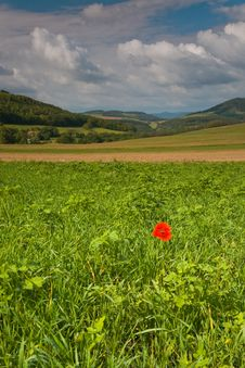 Free Lonely Red Poppy Stock Photo - 4924040