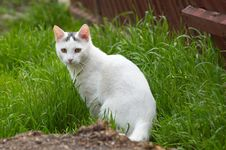 Free White Stray Cat In The Grass Royalty Free Stock Photography - 4924127