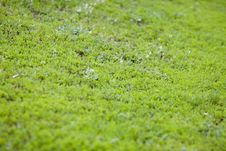 Free Green Grass Royalty Free Stock Images - 4924889
