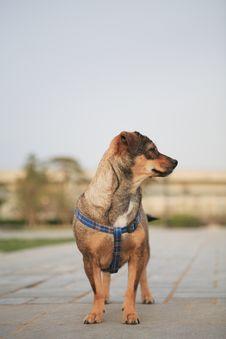 Free Dog Stock Photo - 4925490