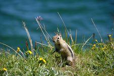 Free Ground Squirrel Stock Photo - 4927610