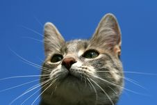 Free Cat On Blue Background Royalty Free Stock Photos - 4927908