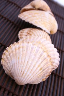 Free Seashell Royalty Free Stock Images - 4928559