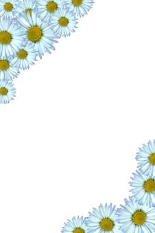 Free Daisy Background Stock Photos - 4928753