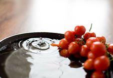 Free Fresh Tomatoes Stock Photo - 4929690