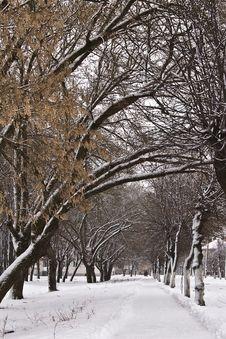 Free Winter Park Royalty Free Stock Photos - 4929928