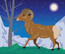 Free Wild Ram In The Mountains Stock Image - 49292111