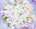 Free Spring Blossoms Royalty Free Stock Images - 4933909