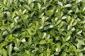 Free Fresh Leaf In Spring Stock Photo - 4933990