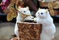 Free Toy Cat Twins Royalty Free Stock Photography - 4936917