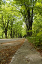 Free Road To Park Royalty Free Stock Photo - 4937755