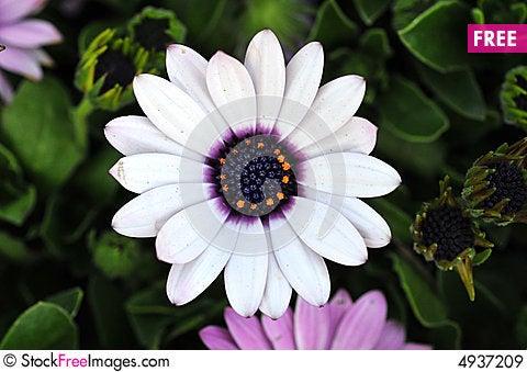 Sun flower, beautiful Stock Photo