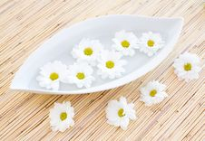 Free Daisy In The Bowl Royalty Free Stock Photography - 4930647