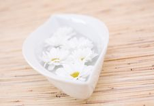 Free Daisy In The Bowl Stock Image - 4930691