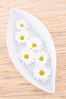 Free Daisy In The Bowl Stock Photos - 4930703
