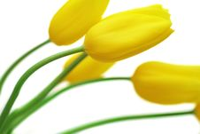 Free Bouquet Of Tulips Royalty Free Stock Photos - 4930738
