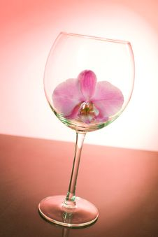 Pink Orchid In The Wine Glass Stock Photo