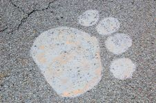 Free Paw Print On Road Royalty Free Stock Photos - 4932108