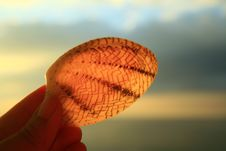 Free Clam In The Sun Royalty Free Stock Photography - 4932167