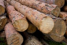 Logs Neatly Stacked Royalty Free Stock Photos
