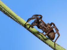 Free Little Wolf Spider Stock Image - 4933251