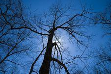 Free Scary Tree Silhouette Stock Photo - 4934520