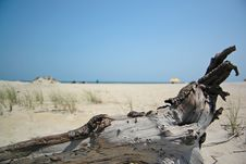 Free Driftwood Royalty Free Stock Images - 4934869