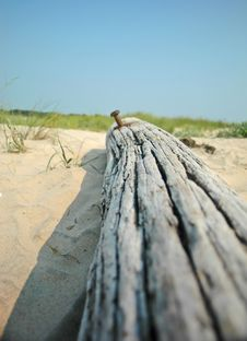 Free Driftwood Royalty Free Stock Photos - 4934878