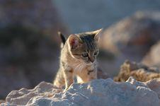 Free Kitten Stock Photo - 4934930