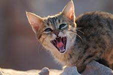 Free Kitten Stock Image - 4934931