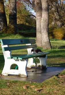 Free Bench In Park Royalty Free Stock Photography - 4935987